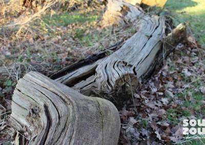 Souzou-visit-Richmond-Park-01