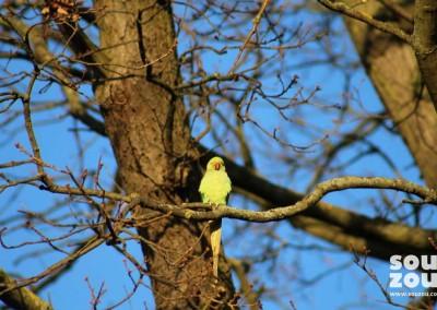 Souzou-visit-Richmond-Park-02