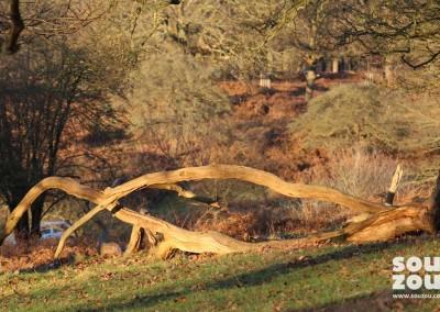 Souzou-visit-Richmond-Park-06